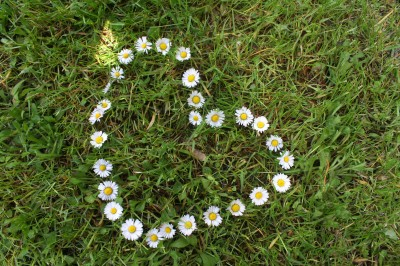 green grass with heart shape made of daises